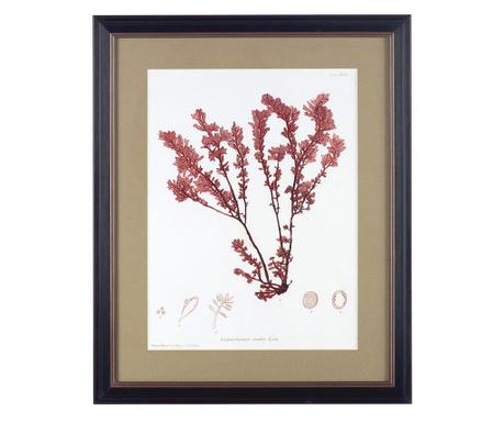 Картина Lomentaria Ovalis 45x55 см