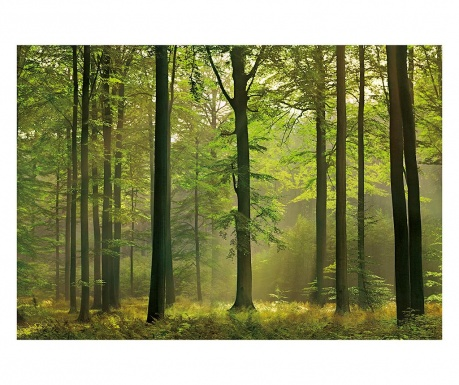 Tapeta Autumn Forest 254x366 cm