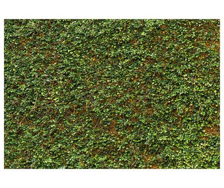 Tapet Ivy Wall 254x366 cm