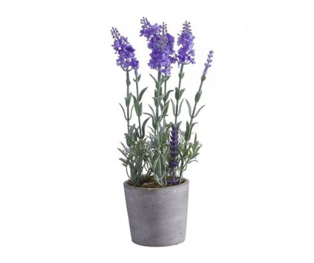 Miorice Light Purple Műnövény virágcserépben