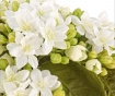 Umetni cvet Blossom Radiance