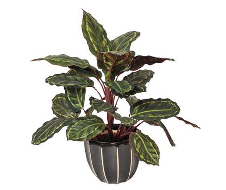 Umjetna biljka u posudi za cvijeće Galatea Cebra