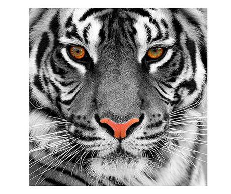 Картина Tiger 80x80 см
