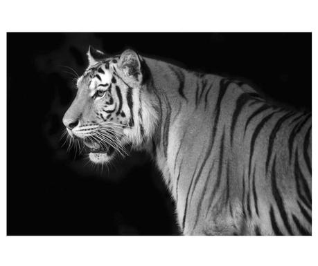Tiger Kép 80 x 120 cm