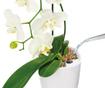 Set - cvetlični lonec z avto-namakalnim sistemom in držalo Deltini Table White M