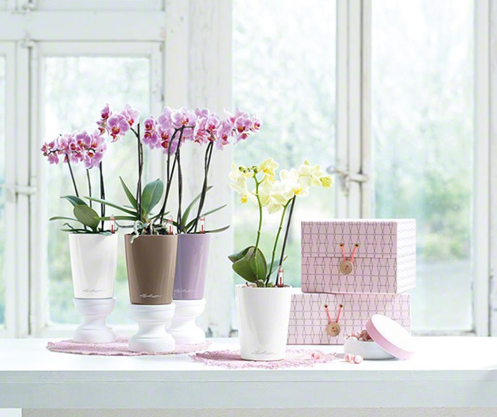 Set - cvetlični lonec z auto-namakalnim sistemom in držalom Deltini Table Violet M