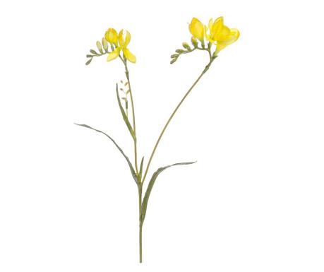 France Freesia Yellow 24 db Művirág