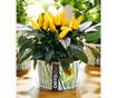 Set za sajenje semen Ortolino Yellow Chilli