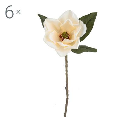 Magnolia Americana Crem 6 db Művirág