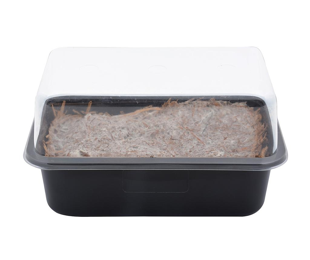 Oprema za sadnju gljiva Champignon