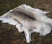 Blana de ren Finish Reindeer Beige Grey 80x100 cm