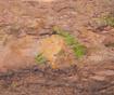 Stojan na květináče Tree Trunk