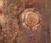 Cvetlični lonec Alvise