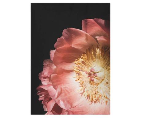 Obraz Rose Flowers 50x70