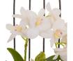 Műnövény virágcserépben